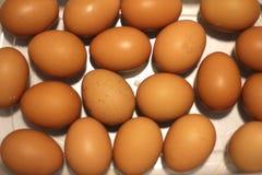 Ovos orgânicos Fotografia de Stock