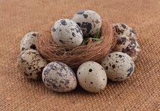 Ovos orgânicos das codorniz imagens de stock royalty free