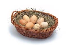 Ovos orgânicos na cesta no feno Fotografia de Stock Royalty Free