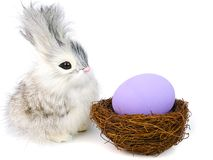 ovos pequenos do coelho e do éster Imagem de Stock