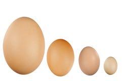 Ovos pequenos e grandes Fotografia de Stock Royalty Free