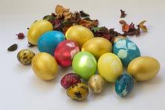 Ovos pintados da galinha e de codorniz da Páscoa entre o animal de estimação secado da flor fotos de stock
