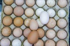 Ovos recolhidos frescos e marcado imagens de stock