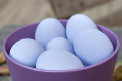 Ovos roxos Foto de Stock