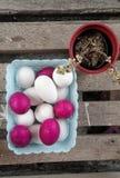 Ovos vermelhos e brancos em uma bandeja com a planta da decoração ao lado dela Imagem de Stock Royalty Free