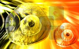 Ovum cell. Digital illustration of  Ovum cell in colour  background Stock Photography