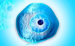 Ovum cell. Digital illustration of ovum cell in colour Royalty Free Stock Image