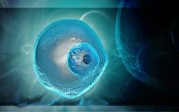 Ovum cell. Digital illustration of Stock Image