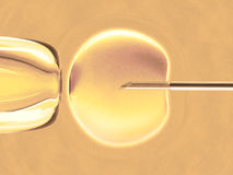 Ovum (in Vitro Fertilization) Royalty Free Stock Photography