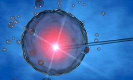 Ovum, insémination artificielle, artificielle Image stock