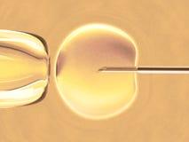Ovum (in vitro fertilization). In vitro fecundation using sperm (also called in vitro fertilization Royalty Free Stock Photography