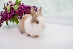 Owłosiony biały królik z czerwonym punktem Bukiet bez w tle obrazy stock