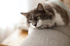 Owłosiony kot na leżance w domu pet kosmos kopii obrazy stock