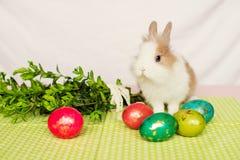 Owłosiony królik z Wielkanocnymi jajkami na zielonym tle 2 forsują pisklęca pojęcia Easter jajek kwiatów trawa malujących umieszc zdjęcia stock