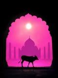 Сow silhouette and Taj Mahal. Indian cow silhouette in arch at Taj Mahal background in India Stock Image