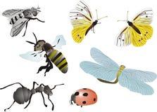 owad gromadzenia danych Obrazy Stock