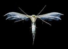 owad miłość Obrazy Stock