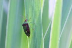 owad trawy. Obraz Royalty Free