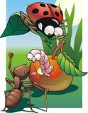 owady Obraz Royalty Free