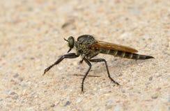 owady Zdjęcie Stock