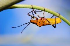 owady Zdjęcia Stock