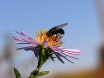 owady Zdjęcie Royalty Free