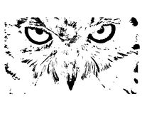 Owel oko Obrazy Stock