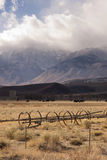 Owen's Valley Sierra Neveda Mountains Livestock Cattle Ranch Stock Image