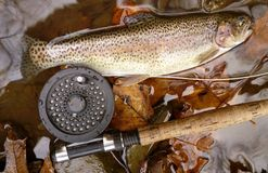 Owens Creek Rainbow Trout Royalty Free Stock Photos