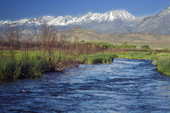 Owens River Sierra. The Owens River flows against a background of snow-capped mountains Royalty Free Stock Photo