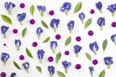 Owers de 'd'ï¬ d'amaranthe de pois bleu et de globe et feuilles de vert Photo libre de droits