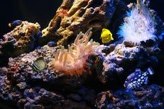 łowi tropikalnego Zdjęcie Royalty Free