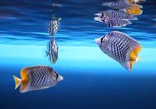 łowi tropikalnego Zdjęcie Stock