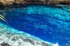 Łowi w cristal czystej wodzie zaczarowany rzeczny Filipiny Fotografia Royalty Free