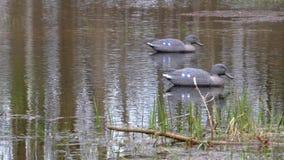?owiecka atrapa na wodzie dla wabije ptaki zbiory wideo