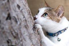 Łowiecki kot Zdjęcie Royalty Free