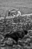 Łowiecki kot Zdjęcia Royalty Free