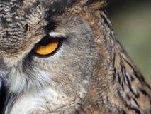 Owl& x27 μάτι του s Στοκ Φωτογραφία