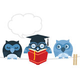 Owl. Wise owl books colored background reading Stock Images