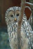 Owl. Night bird Stock Photo