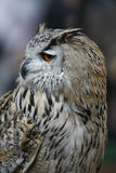 owl Arkivbilder