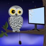 IT owl. Stock Image