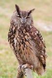 Owl. At the zoo Stock Photos