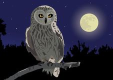 Owl. The image of the owl sitting on a branch by a moonlight night Royalty Free Illustration