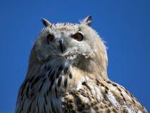 Owl. A phtot of an owl Stock Image