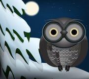 Owl. Sitting at night on snowed tree Royalty Free Stock Image