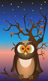 Owl. Cuty owl on the tree in the night royalty free illustration