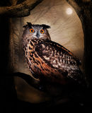 Owl. Great horned owl in a tree in the night with a full moon