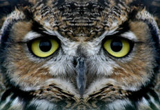 Free OWl Stock Photos - 245773