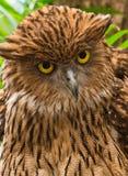 A Owl Stock Photos